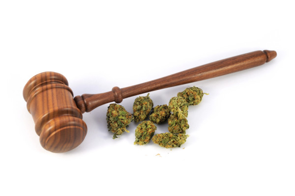 Conceptual image of legalized weed laws using fresh marijuana and a wooden gavel isolated over a white background.