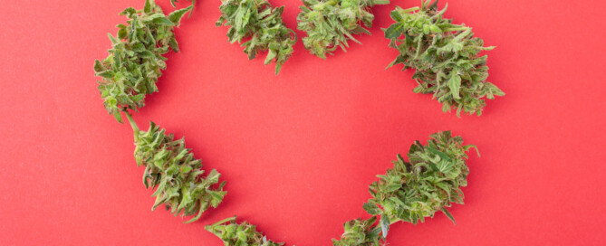 cannabis buds forming valentine heart